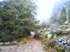 Paisaje y camino