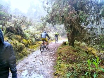 Ciclistas en el camino