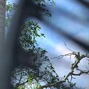 Vigilante en las alturas