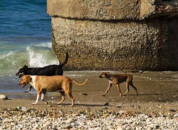 perrosplayeros